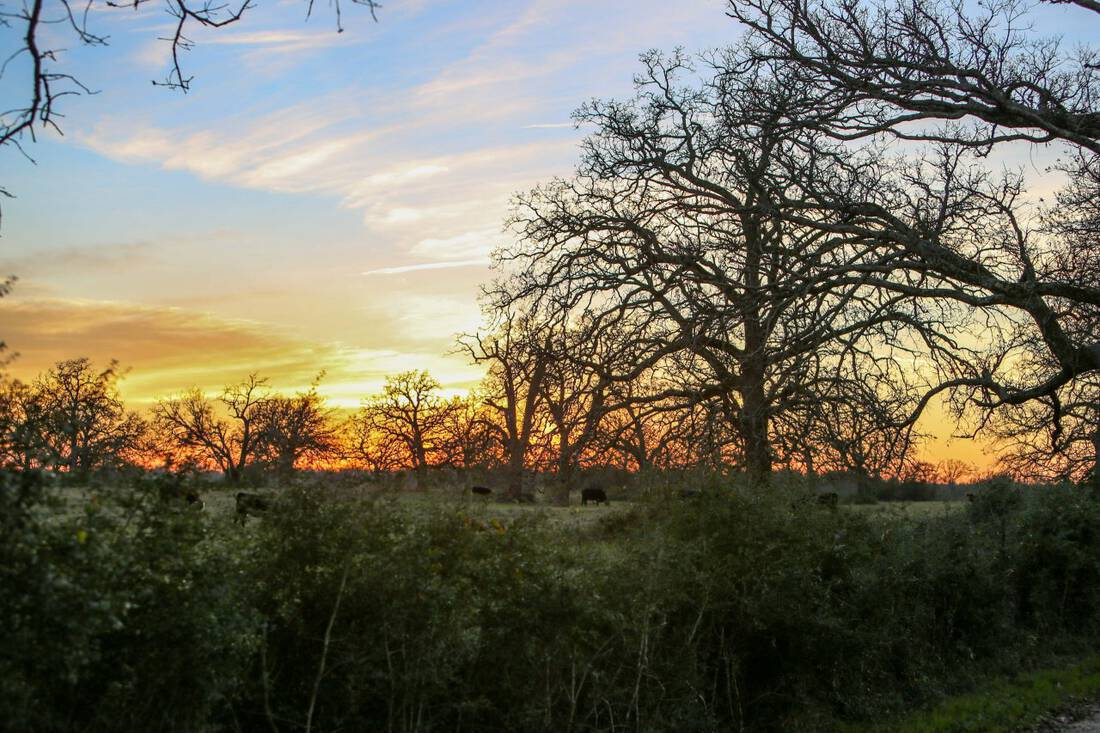 Madison County Ranch for Sale Tallon Martin Ranch Broker Republic Ranches Ranch Sales Austin Ranch Broker Austin Real Estate, Lands of Texas Acreage Real Estate Ranch Texas Hunting ranch deer hunting dove hunting fishing land for sale near austin
