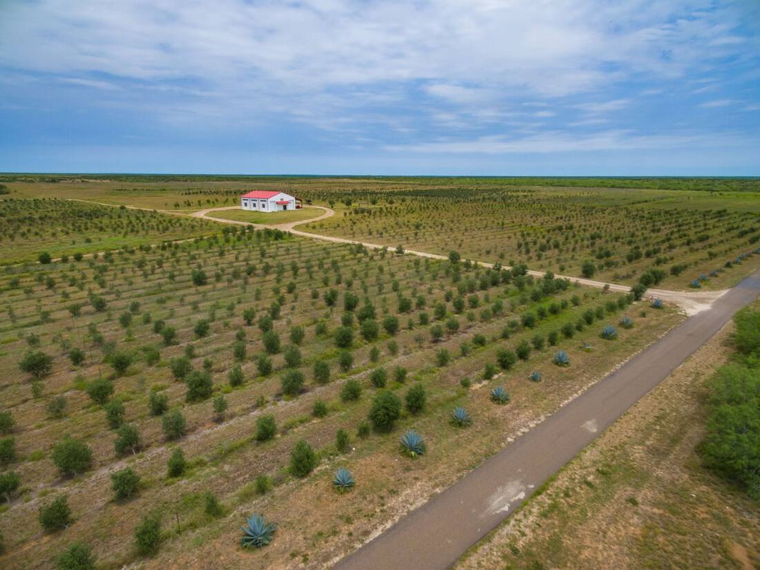 Olive Grove Aerial