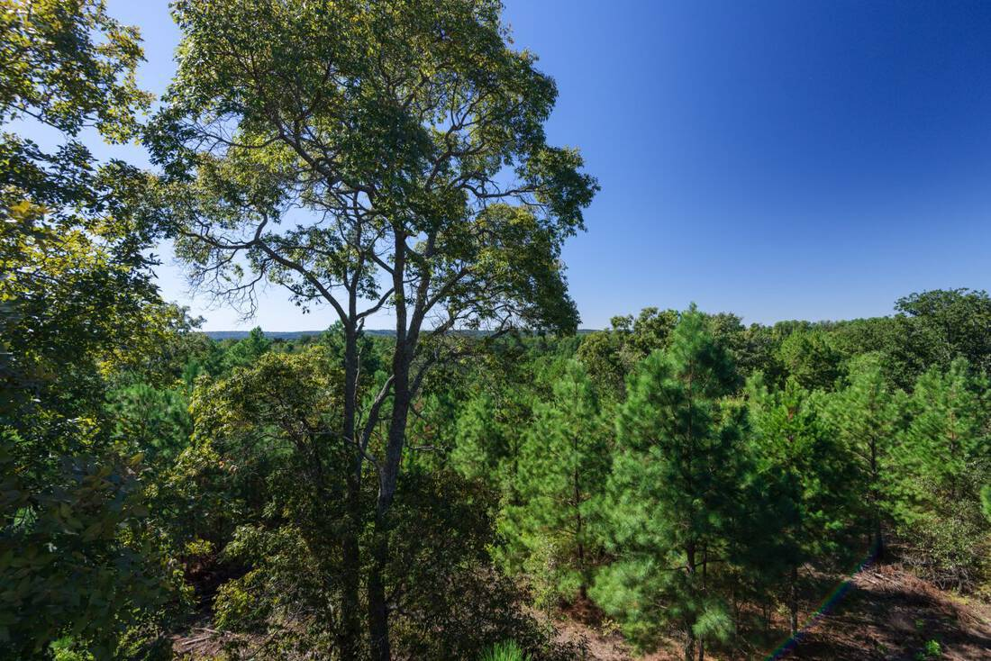 Chicken Ranch-Republic Ranches-Bryan Pickens-Henderson County-Frankston Texas-Timber-Deer Hunting Ranch - 104