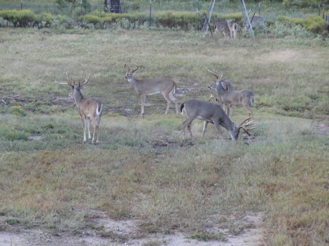 multiple-bucks-field-pic