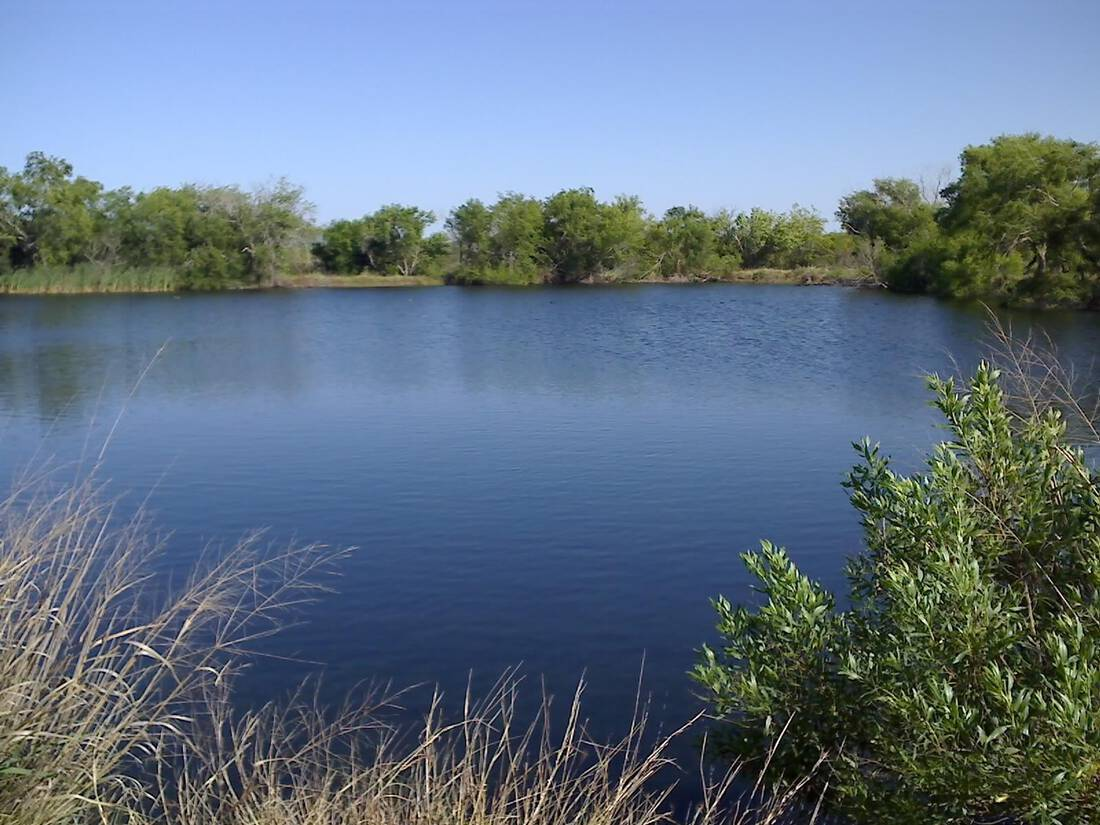Stock The Pond With The Most Popular Forage Fish
